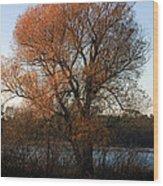 Golden Autumn Wood Print by Rhonda Humphreys