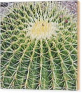 Golden Ball Cactus Wood Print