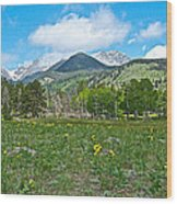 Golden Banner In Horseshoe Park In Rocky Mountain Np-co- Wood Print