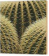 golden barrel cactus Mexico Wood Print