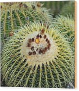 Golden Barrel Cactus Wood Print