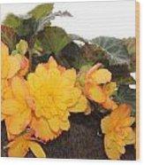 Golden Beauty Wood Print