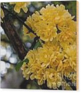 Golden Blooms Two Wood Print