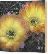 Golden Cactus Flowers  Wood Print