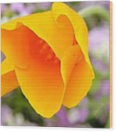 Golden California Poppy Wood Print