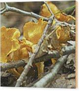 Golden Chanterelle - Cantharellus Cibarius Wood Print