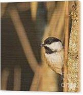 Golden Chickadee Wood Print