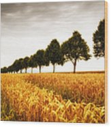 Golden Cornfield And Row Of Trees Wood Print