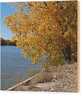Golden Cottonwoods Wood Print