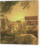 Golden Cows Wood Print