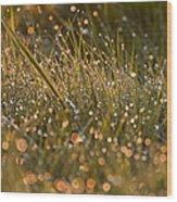 Golden Dew Drops Wood Print