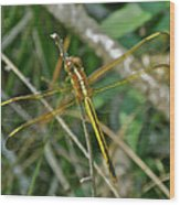 Golden Dragonfly At Rest Wood Print