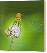 Golden Dragonfly On Perch Wood Print