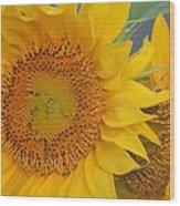 Golden Duo - Sunflowers Wood Print