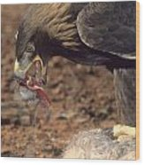 Golden Eagle Eats Wood Print