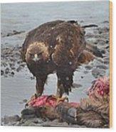 Golden Eagle On An Elk Carcass Wood Print