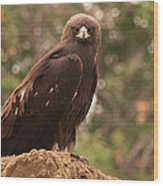 Golden Eagle Wood Print by Roger Snyder