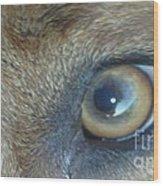 Golden Eye Of Norbu 12 18 2011 Wood Print
