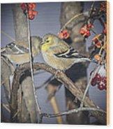 Golden Finch Cold Shoulder Wood Print