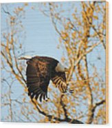 Golden Flight In April Wood Print