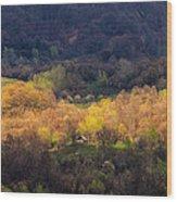 Golden Forest Wood Print