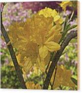 Golden Glory - Azalea Wood Print