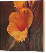 Golden Glow Canna Lily Wood Print