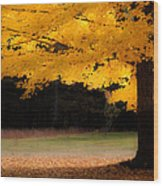 Golden Glow Of Autumn Fall Colors Wood Print