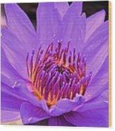 Golden Glow Of The Lavender Lotus Wood Print