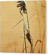 Golden Grain Silhouette Wood Print