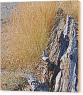 Golden Grass Wood Print