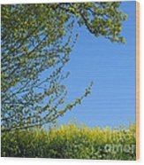 Golden Growing Season Wood Print