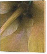 Golden Hibiscus 2616 Wood Print