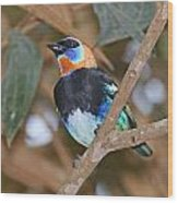 Golden-hooded Tanager Wood Print