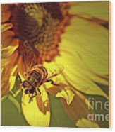 Golden Hoverfly 2 Wood Print