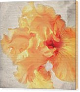 Golden Iris 2 Wood Print