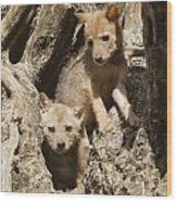 Golden Jackal Canis Aureus Cubs Wood Print