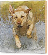 Golden Labrador Wood Print