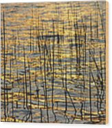 Golden Lake Ripples Wood Print by James BO  Insogna
