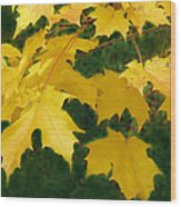 Golden Leaves Floating Wood Print
