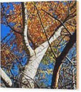 Golden Leaves II Wood Print