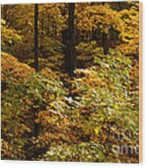 Golden Leaves In Autumn Wood Print
