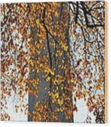 Golden Leaves In Mt Vernon Wood Print