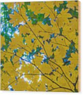Golden Leaves Of Autumn Wood Print