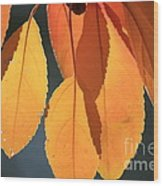 Golden Leaves With Golden Sunshine Shining Through Them Wood Print