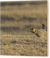 Golden Light On The Prairie Wood Print