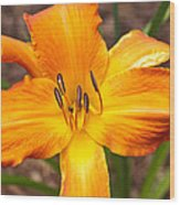 Golden Lilly 2 Wood Print