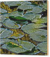 Golden Lilly Pads Wood Print