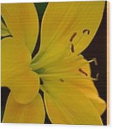Golden Lily Glow Wood Print