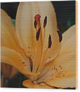 Golden Lily Wood Print